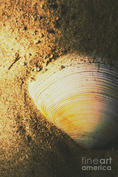 Seashells And Beach Colours Poster