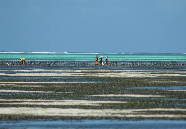 Seaweed Colectors Poster