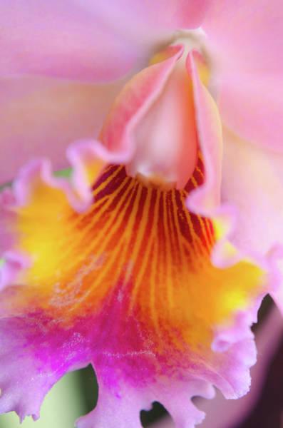 Sensual Floral Poster