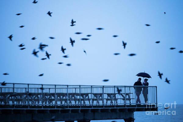 Sheltering Under An Umbrella Watching The Birds Poster