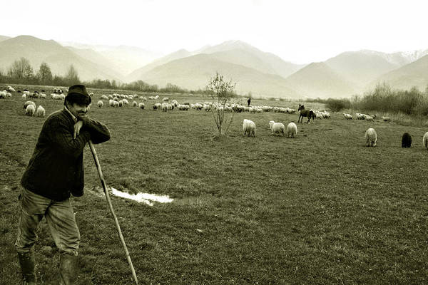 Shepherd In The Carpathians Mountains Poster