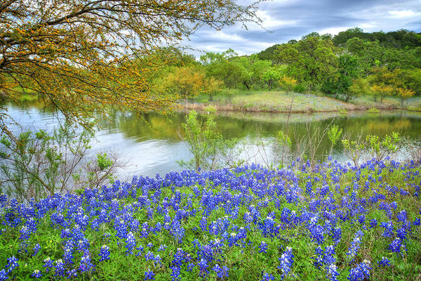 Shoreline Bluebonnets At Lake Travis Poster