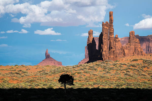 Silhouetted Tree At Monument Valley Poster