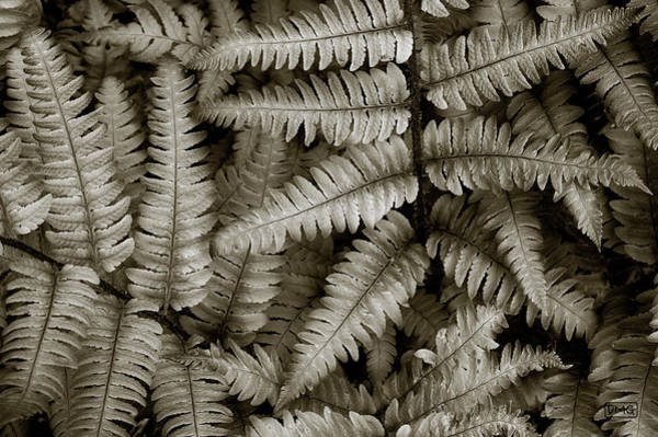 Silvery Ferns Poster