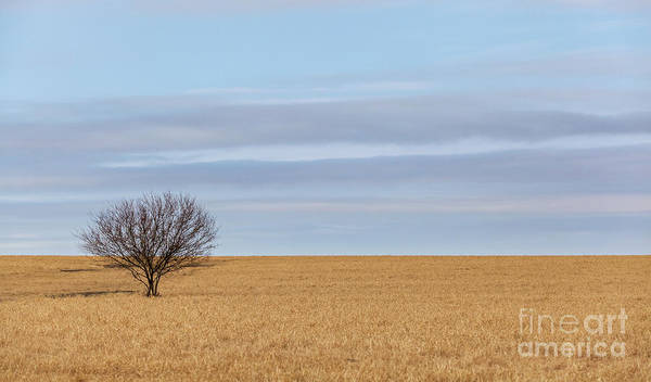 Single Tree In Large Field With Cloudy Skies Poster