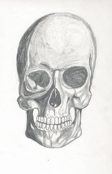 Skull Study 2 Poster