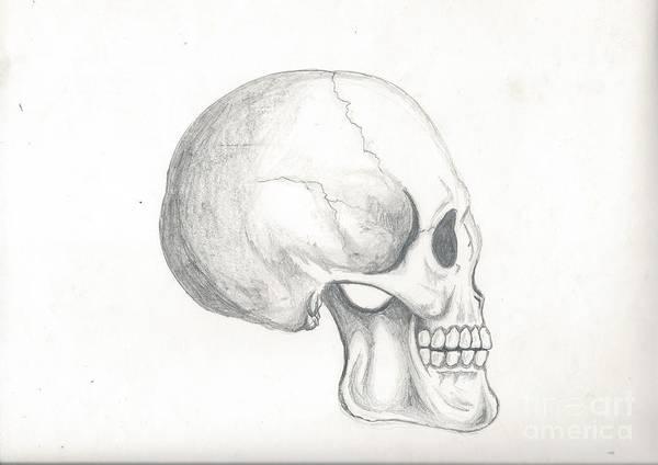 Skull Study Poster