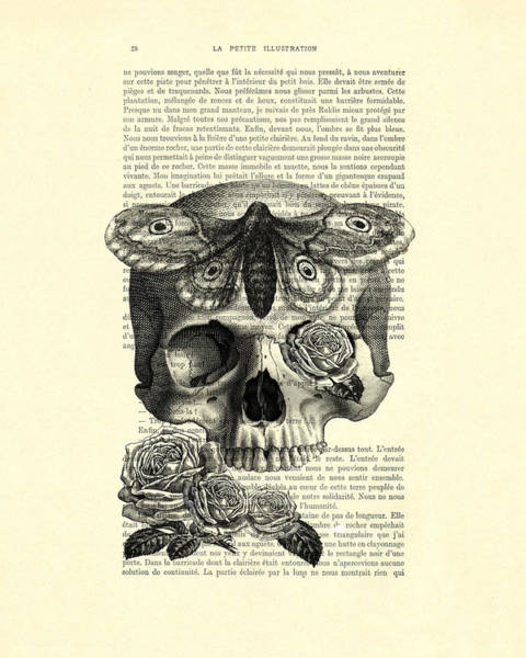 Skull With Hawkmoth Black And White Poster