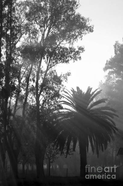 Smoky Morning Trees Poster