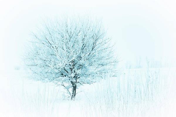 Snow Field Tree Poster