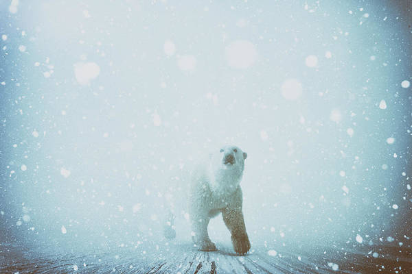 Snow Patrol Poster