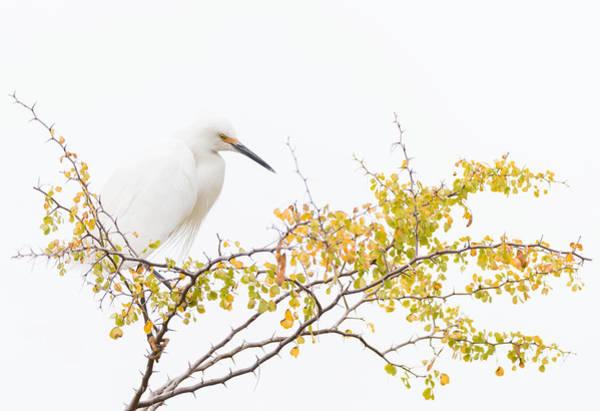 Zen Solitude Poster