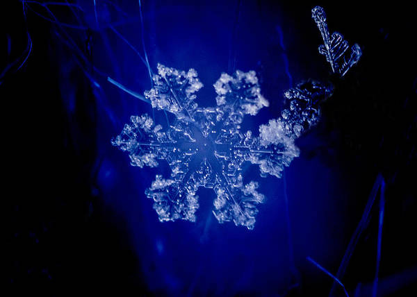 Snowflake On Blue Poster