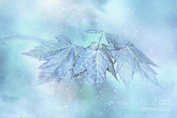 Snowy Baby Leaves Poster