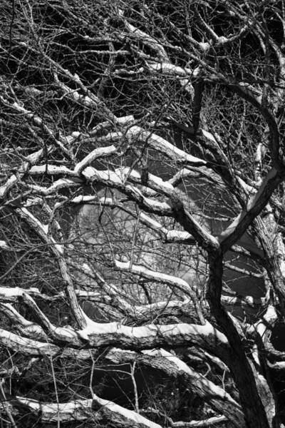 Snowy Branches Against A Full Moon Poster