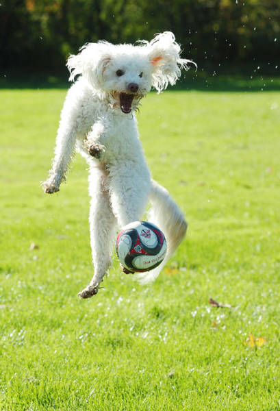 Soccer Dog-5 Poster