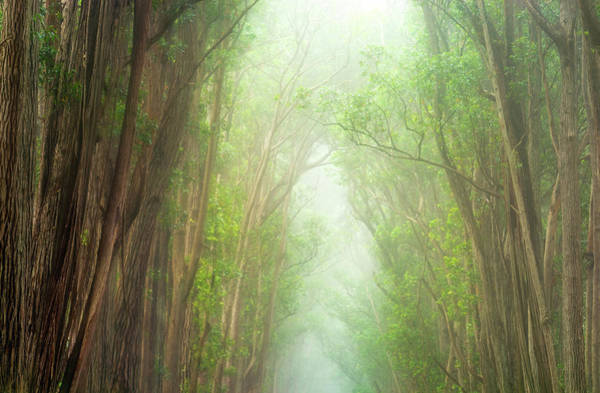 Soft Forest Light Poster