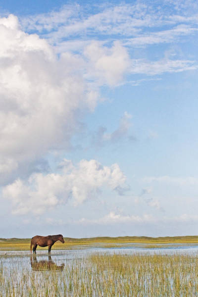 Solitary Wild Horse Poster