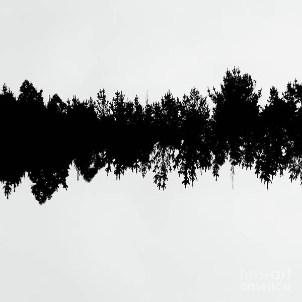 Sound Waves Made Of Trees Reflected Poster
