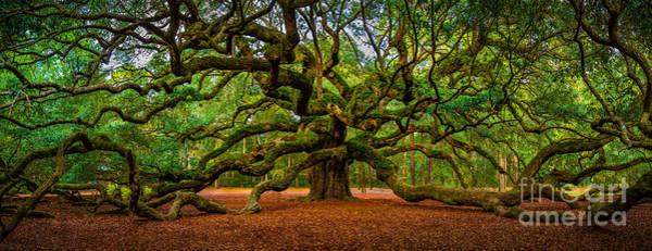 Angel Oak In Charleston Poster