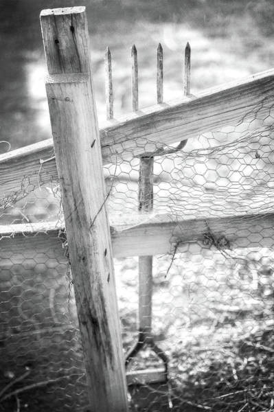 Spading Fork On Chicken Wire Fence In Black And White Poster