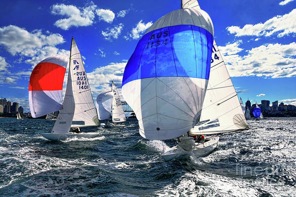 Spinnakers And Sails By Kaye Menner Poster