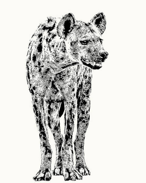 Spotted Hyena Full Figure Poster