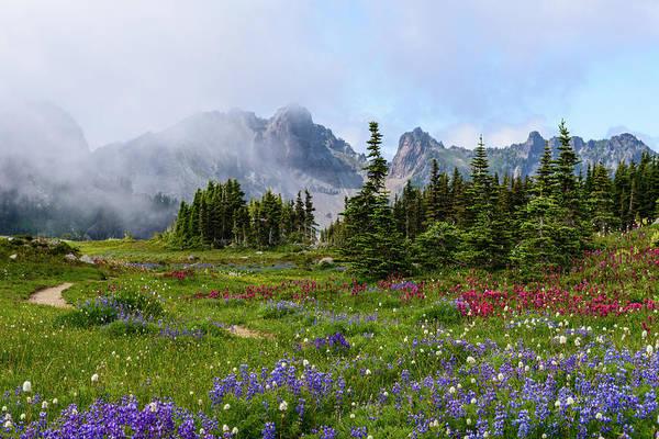 Spray Park In Mount Rainier Poster