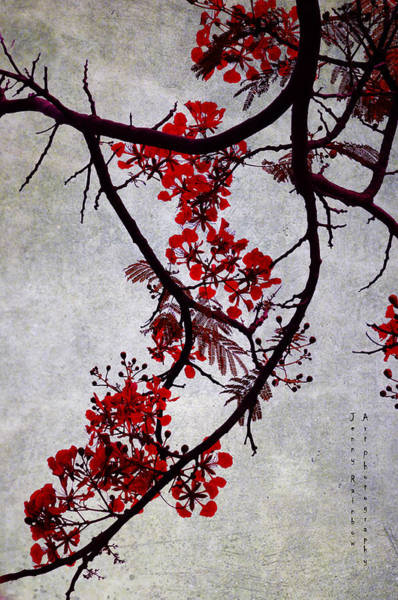 Spring Bloosom In Maldives. Flamboyant Tree II. Japanese Style Poster