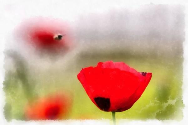 Spring Flowering Poppies Poster