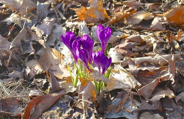 Spring Gathering Poster