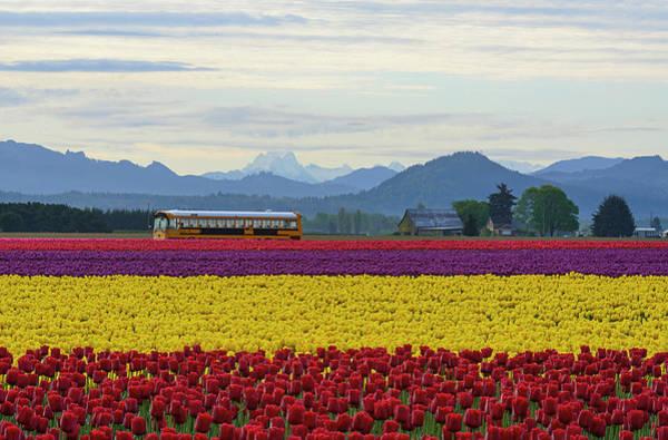 Spring In Skagit Valley Poster