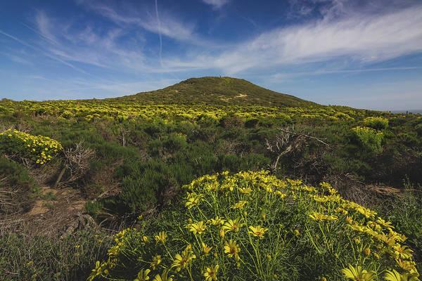 Spring Wildflowers Blooming In Malibu Poster