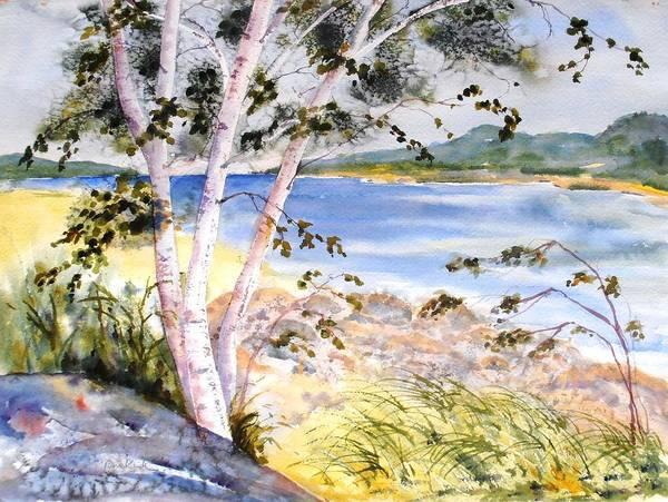 Springtime Birches Poster
