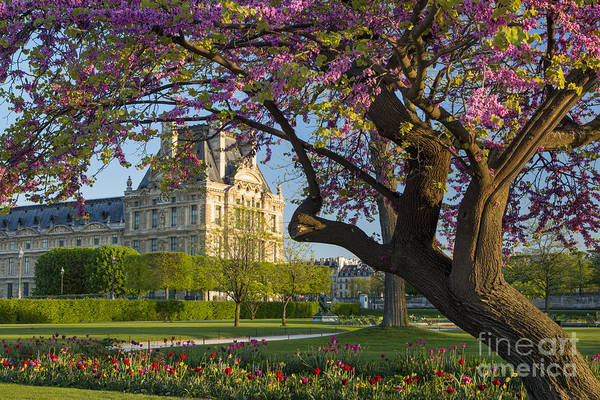 Poster featuring the photograph Springtime In Paris by Brian Jannsen