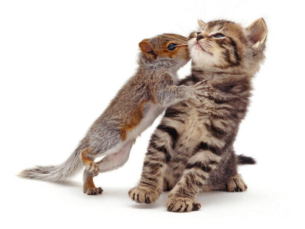 Squirrel Kiss Poster