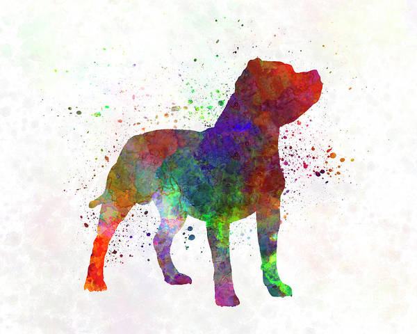 Staffordshire Bull Terrier In Watercolor Poster