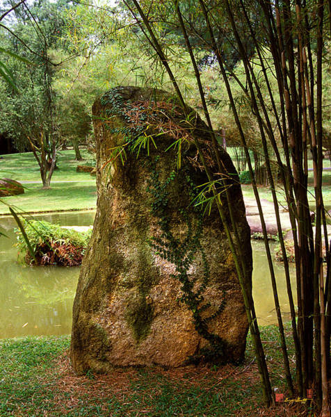 Standing Stone With Fern And Bamboo 19a Poster