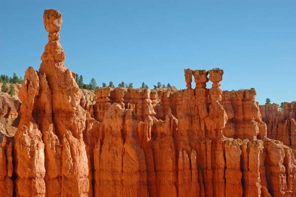 Standing Tall In Bryce Canyon Poster