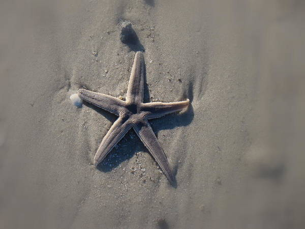 Star In The Sand Poster