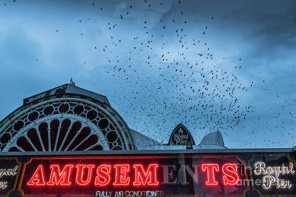 Starlings Over Aberystwyth Royal Pier Poster