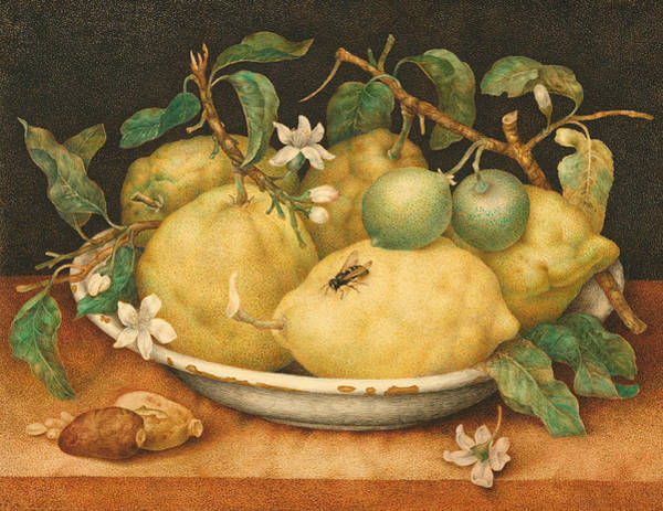 Still Life With A Bowl Of Citrons Poster