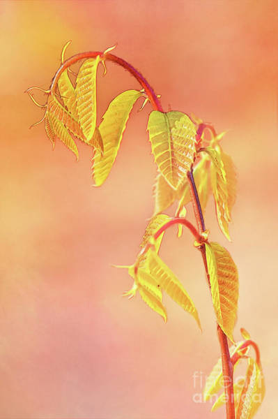 Stylized Baby Chestnut Leaves Poster