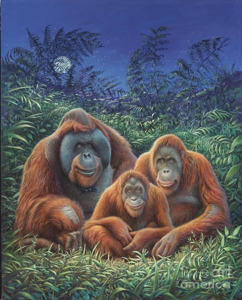 Sumatra Orangutans Poster