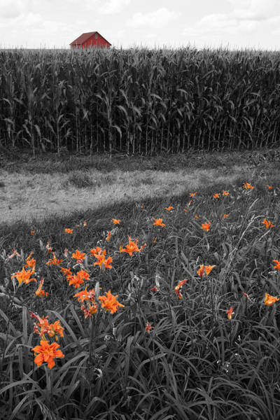 Poster featuring the photograph Summer Fields by Dylan Punke