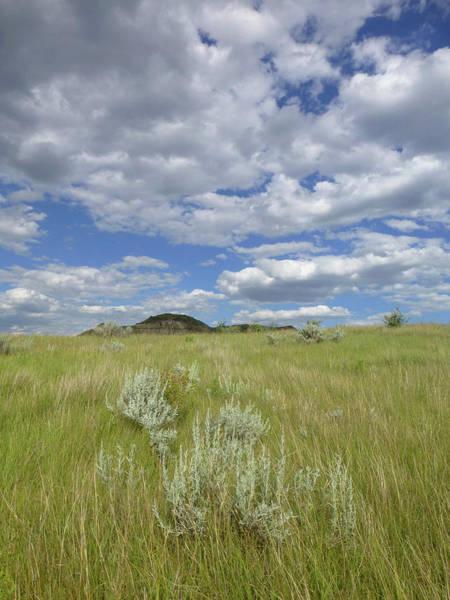 Summertime On The Prairie Poster