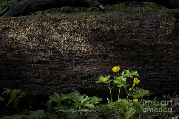 Sun Beam On Log Poster