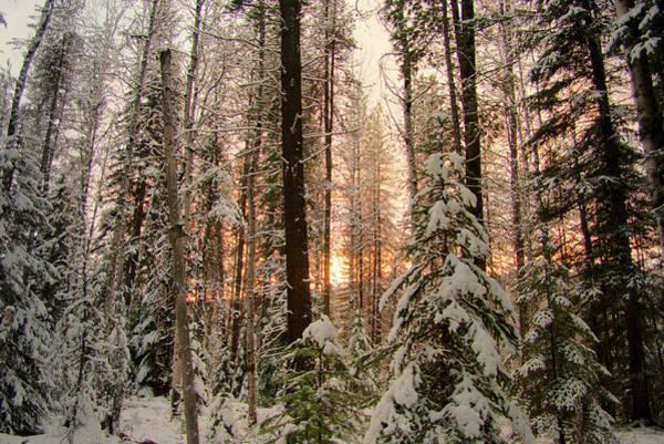 Sun Of Winter Trees Poster