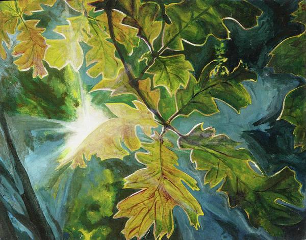 Sun Through Oak Leaves Poster