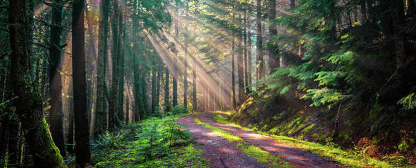 Sunbeams In Trees Poster